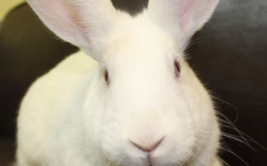 National 'Adopt a Rescued Rabbit' Month at Waukesha Humane Society